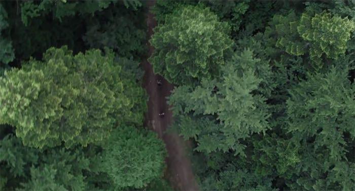 Fotograma de la película The Forest (2016). Situada en Aokigahara, el famoso bosque de los suicidios de Japón: